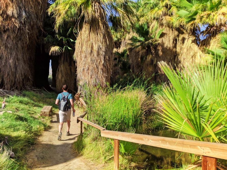 Chris Taylor Hiking at Coachella Valley Nature Preserve Palm Oasis California 3