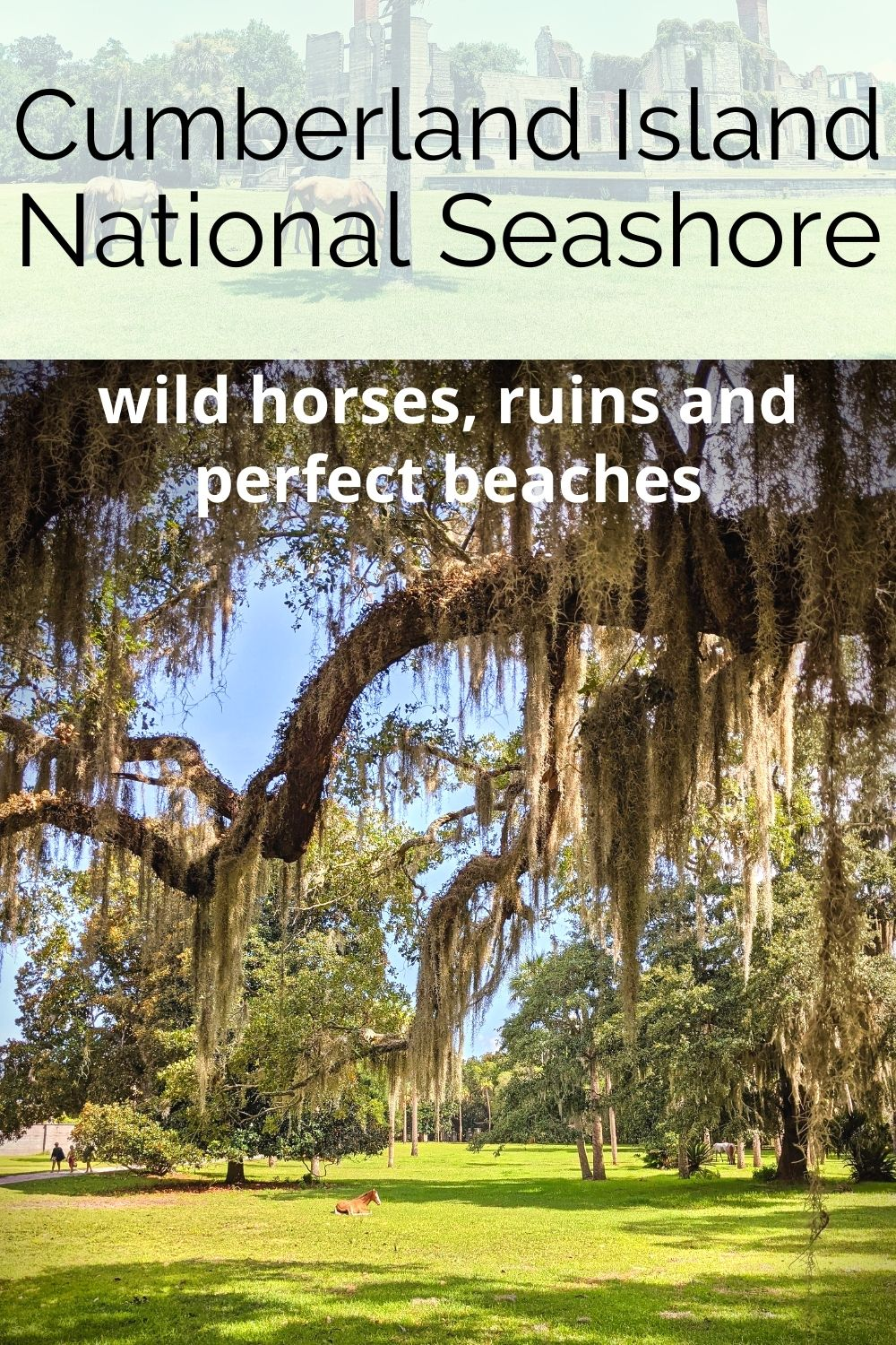 Do you know about Cumberland Island National Seashore and the wild horses? This is a guide to visiting an incredible National Park site on the Georgia coast between Savannah and Jacksonville. Everything you need to know to plan and have an amazing visit to Cumberland Island.