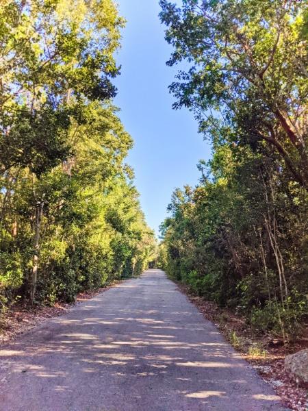 Dagny Johnson Botanical State Park walking trail Key Largo Florida Keys 2020 1