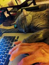 Duke holding my hand blogging on laptop 1