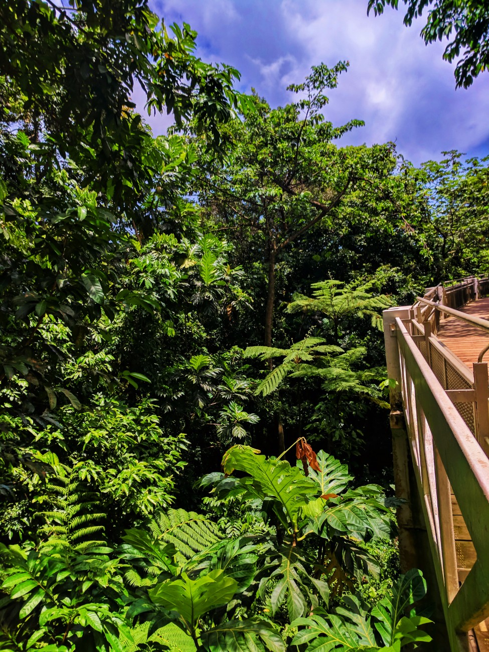 El Portal canopy walk Rainforest El Yunque National Forest Puerto Rico 1