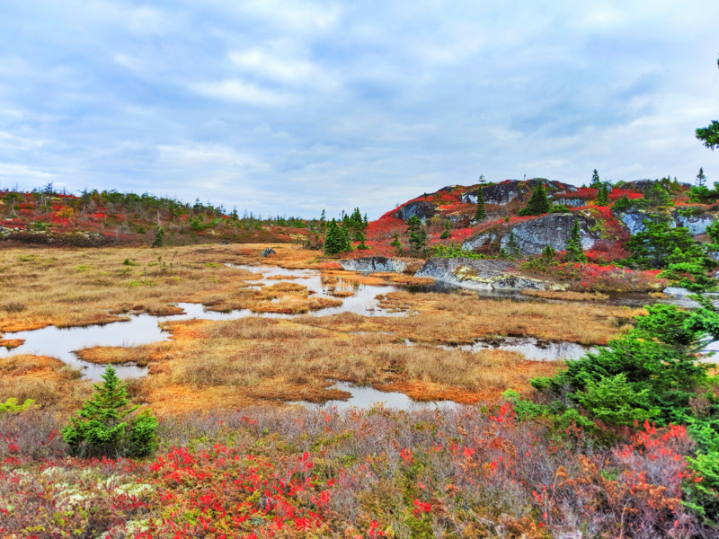 Fall Colours wild blueberry bushes Duncans Cove Preservation Area Nova Scotia 3