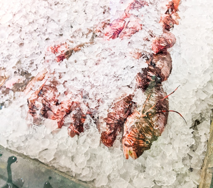 Fish on ice at Fishermans Dock Saint Augustine Beach 1