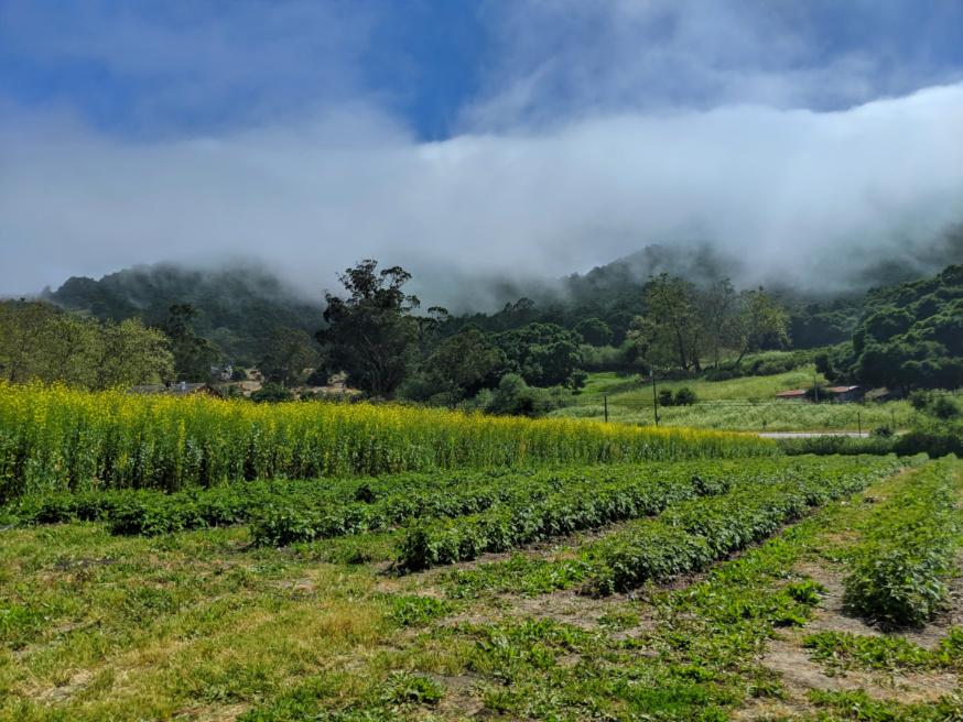 Fog rolling over hills at Avila Valley Barn Central Coast California 2