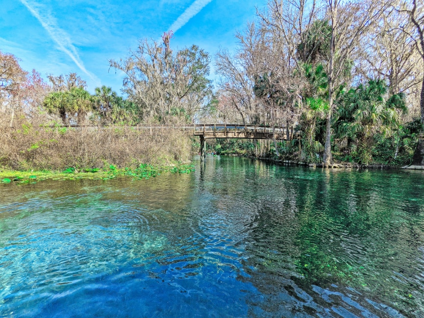 Best Florida Springs That Your Kids Will Rave About