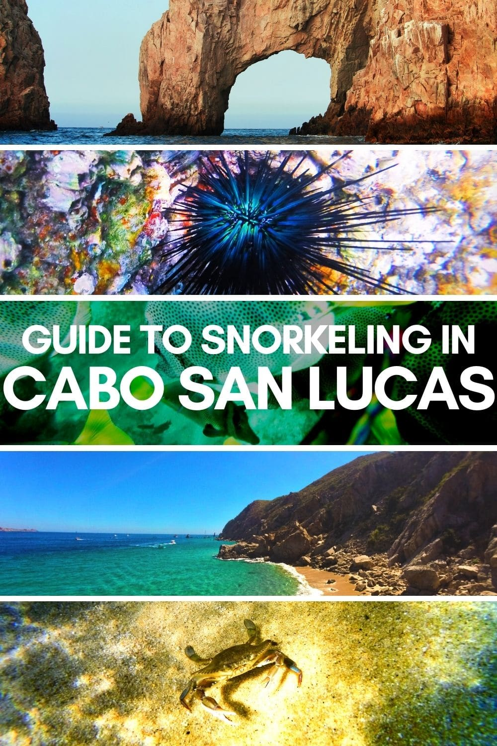 Guide to snorkeling in Cabo San Lucas, all the way up to Cabo Pulmo National Park. Snorkeling maps and tour recommendations, on your own or with kids. Best of Baja beaches and wildlife.