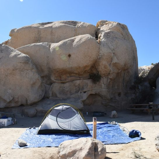 Joshua Tree Day Trip Exploring A Truly Unusual National