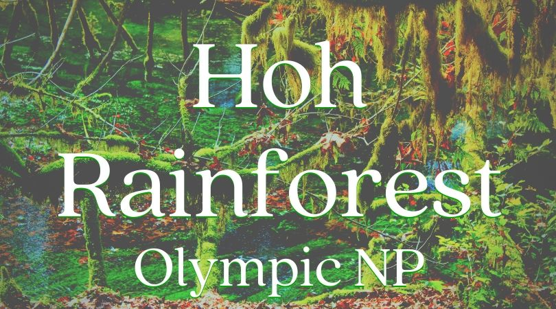 Everything you need to know about exploring the Hoh Rainforest in Olympic National Park. Trail recommendations, wildlife to watch for, and photography tips. #NationalPark #Washington
