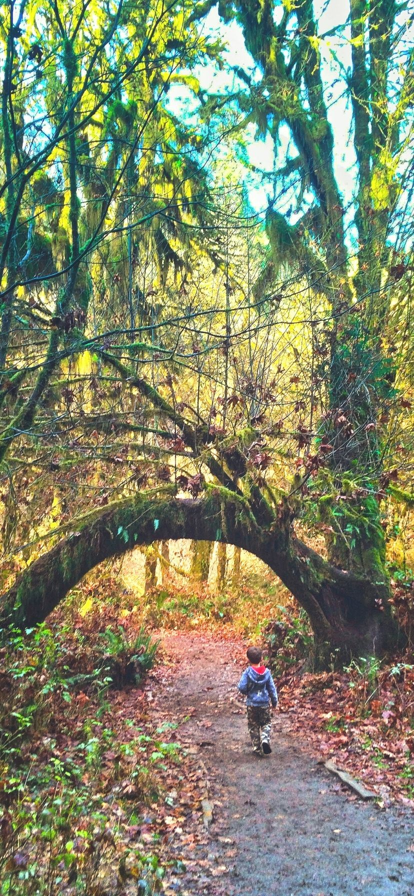 Hoh Rainforest Olympic Peninsula Things to Do