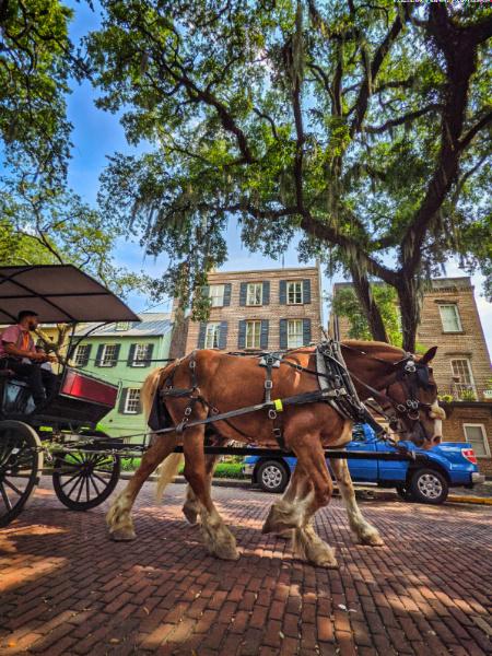 Horsedrawn Carriage in Historic District Savannah Georgia 1
