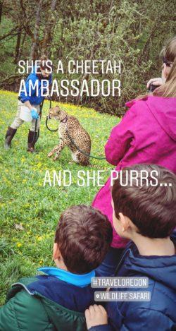 Wildlife Safari Roseburg Oregon IG story