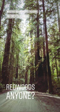 Jeddadiah Smith Redwoods National Park IG story