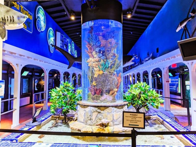Inside Key West Aquarium Florida Keys 2020 1