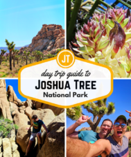 A Joshua Tree day trip is a fun, unique Southern California adventure. From hikes and bouldering to exploring oases, there's something for everyone. Bonus: super bloom info!