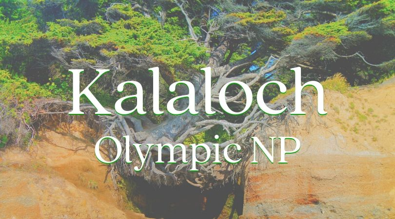 Kalaloch at Olympic National Park is one of the most unique and beautiful areas on the Washington coast. Long stretches of beach, epic old growth trees, and diverse camping experiences make it a great PNW getaway. #camping #olympicnp #washington