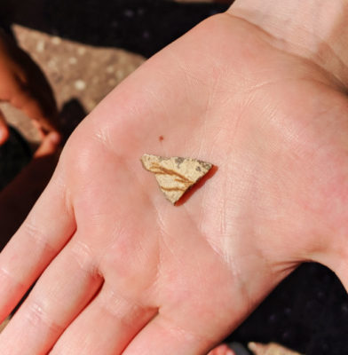 Leaf fossil on Rock at Leaf Hill Trail Painted Hills John Day Fossil Beds NM Oregon 1