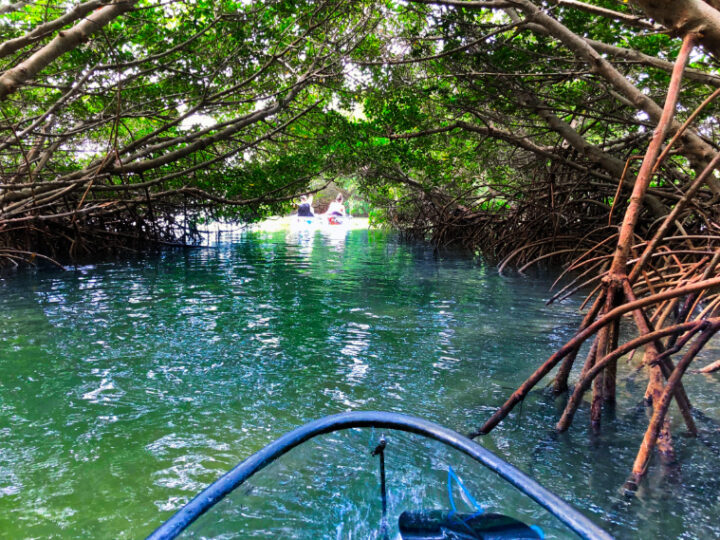 Clear Kayaking Tampa Bay: You Must See The Beautiful Shell Key Preserve