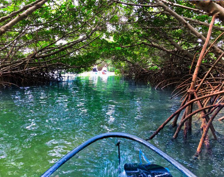 Mangrove Tunnel_Marcea Cazel