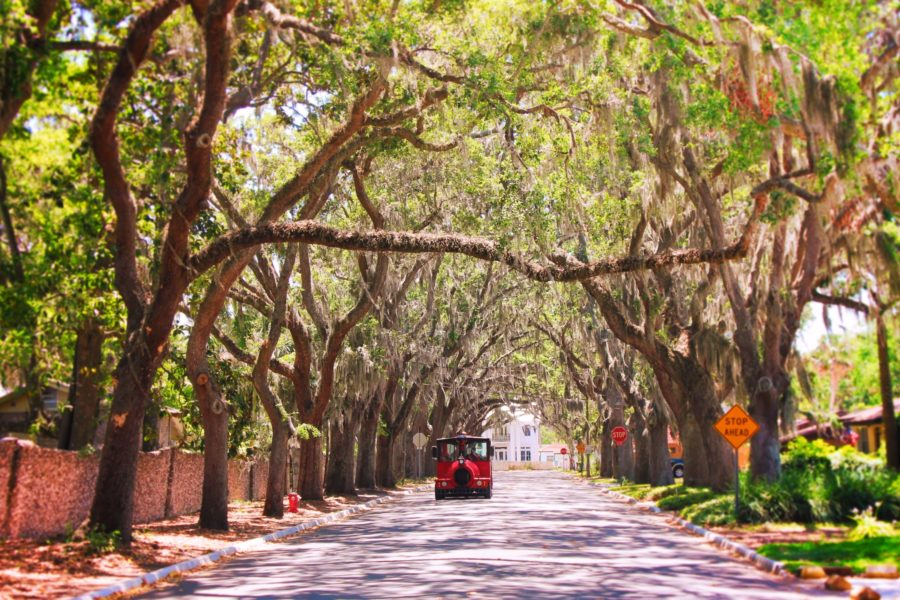 Most Beautiful Street in America Magnolia Street St Augustine 2