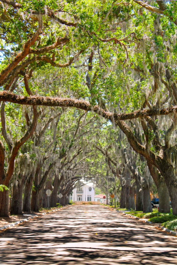 Most Beautiful Street in America Magnolia Street St Augustine 7