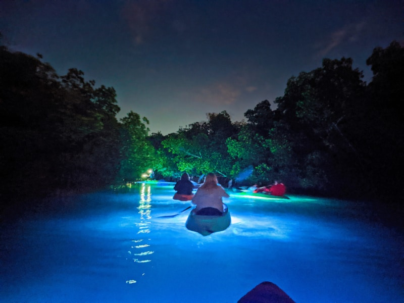 Nighttime Wildlife Safari with Night Kayak Key West Florida Keys 2020 5