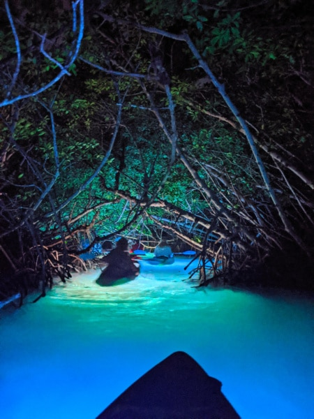 Nighttime Wildlife Safari with Night Kayak Key West Florida Keys 2020 8