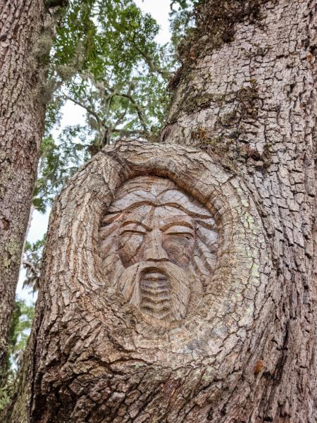 Old Man Mustache Spirit Tree St Simons Island Golden Isles Georgia 4