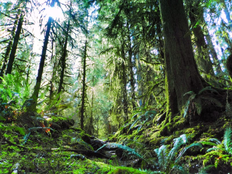 Olympic National Park Hoh River Trail Hoh Rainforest Ordinary Adventures 1