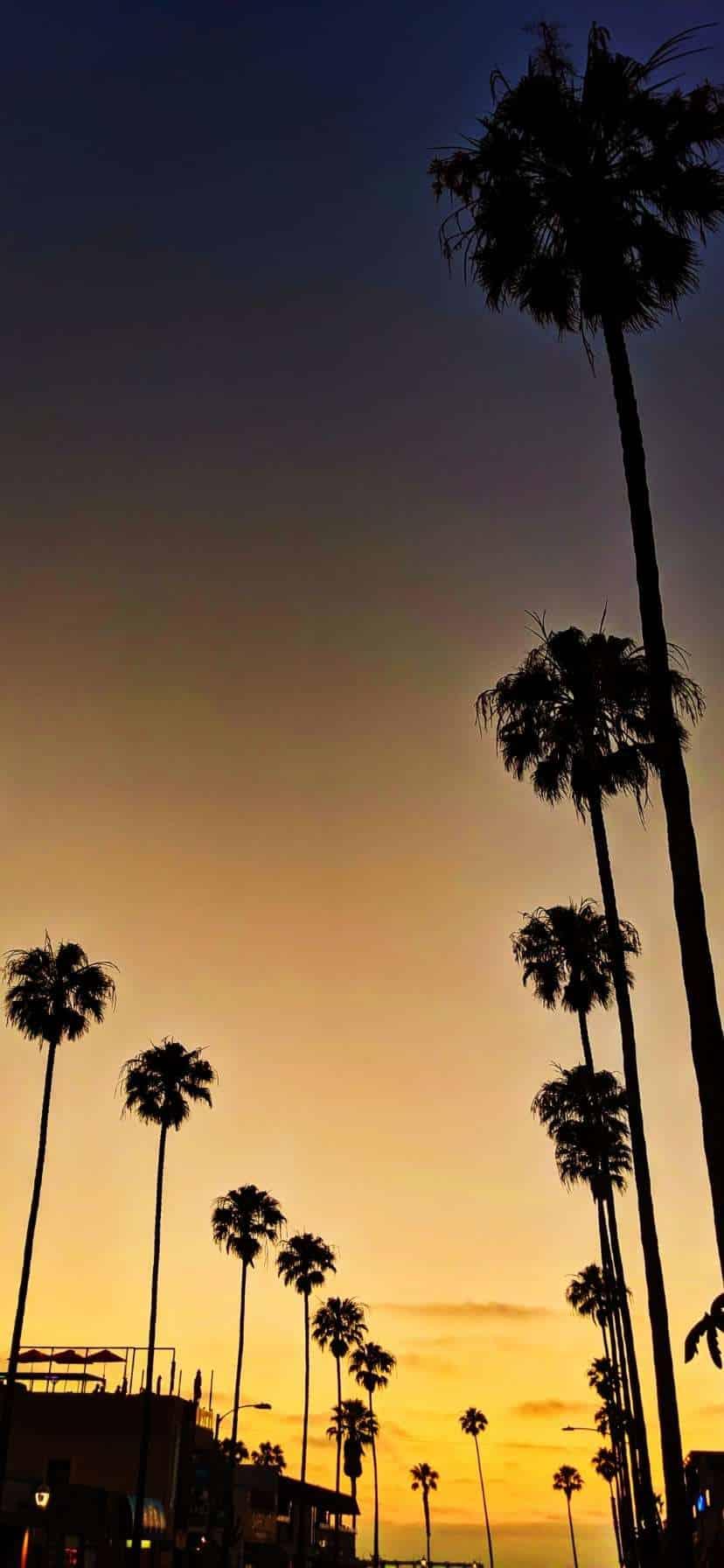 Palm Tree Sunset San Diego California Coast Road Trip