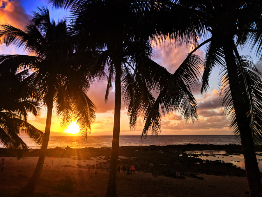 Palm-trees-at-Sunset-Sharks-Cove-Oahu-North-Shore-8.jpg