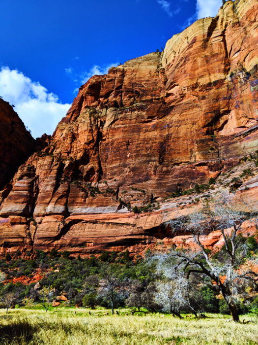 Red Rock walls at Big Bend of Zion Canyon Zion National Park Utah 1