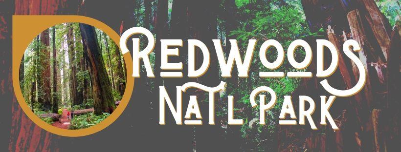 Redwood NPS Header