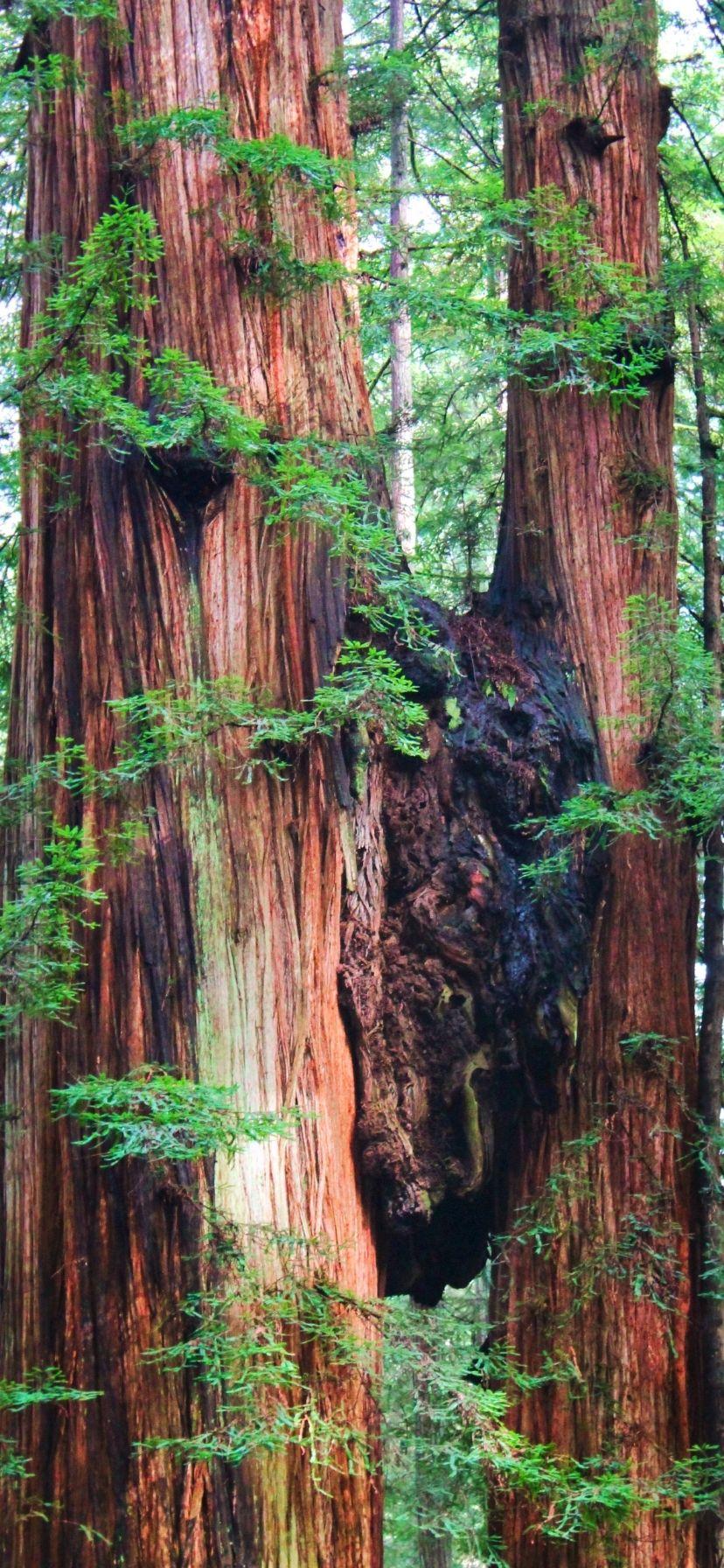 Redwoods National Park California Coast Road Trip