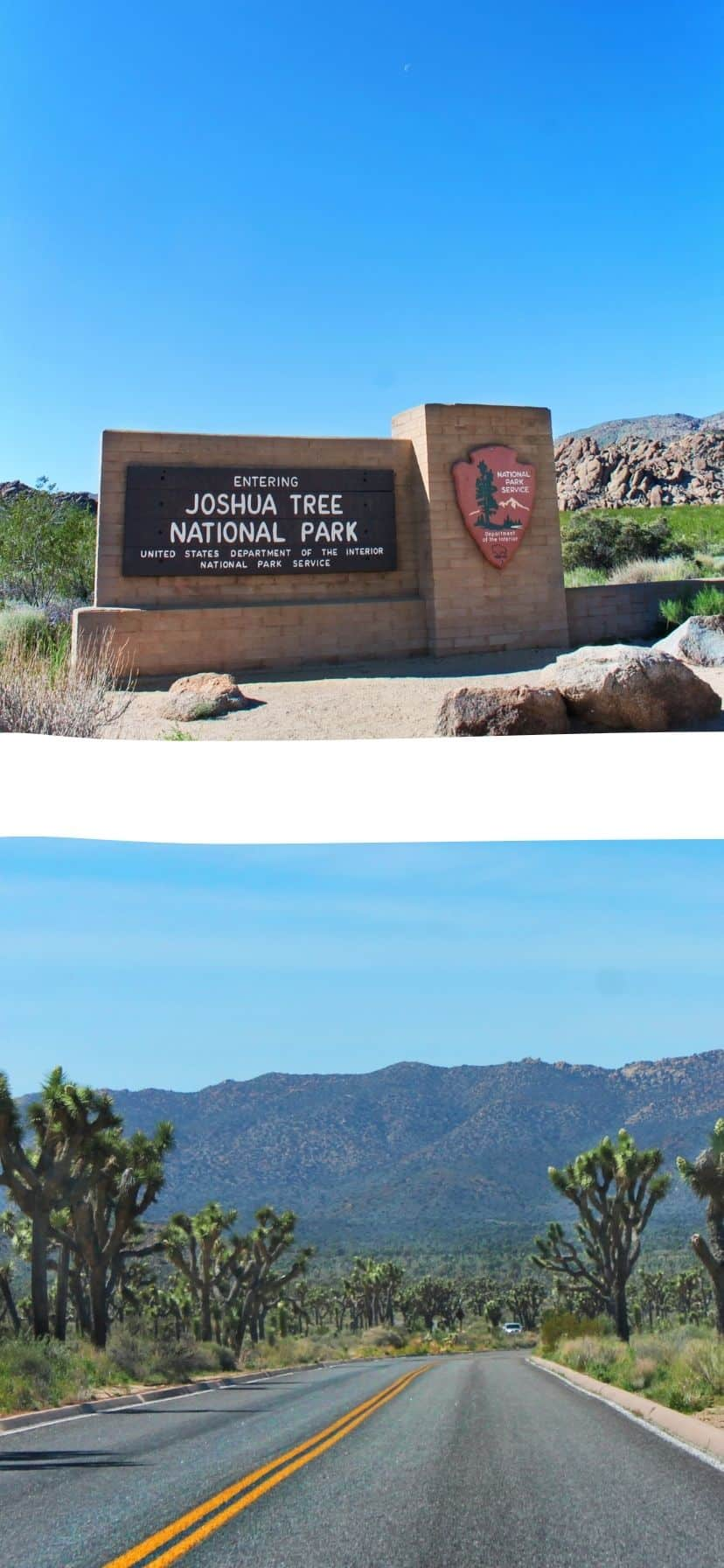 Road Trip to Joshua Tree National Park