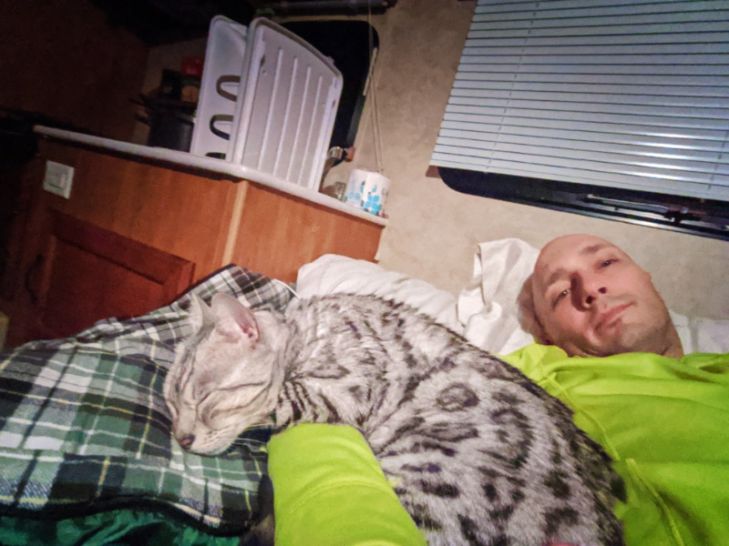 Rob Taylor and Bijoux Bengal Cat in Camper Trailer Cross Country Move 2020 1