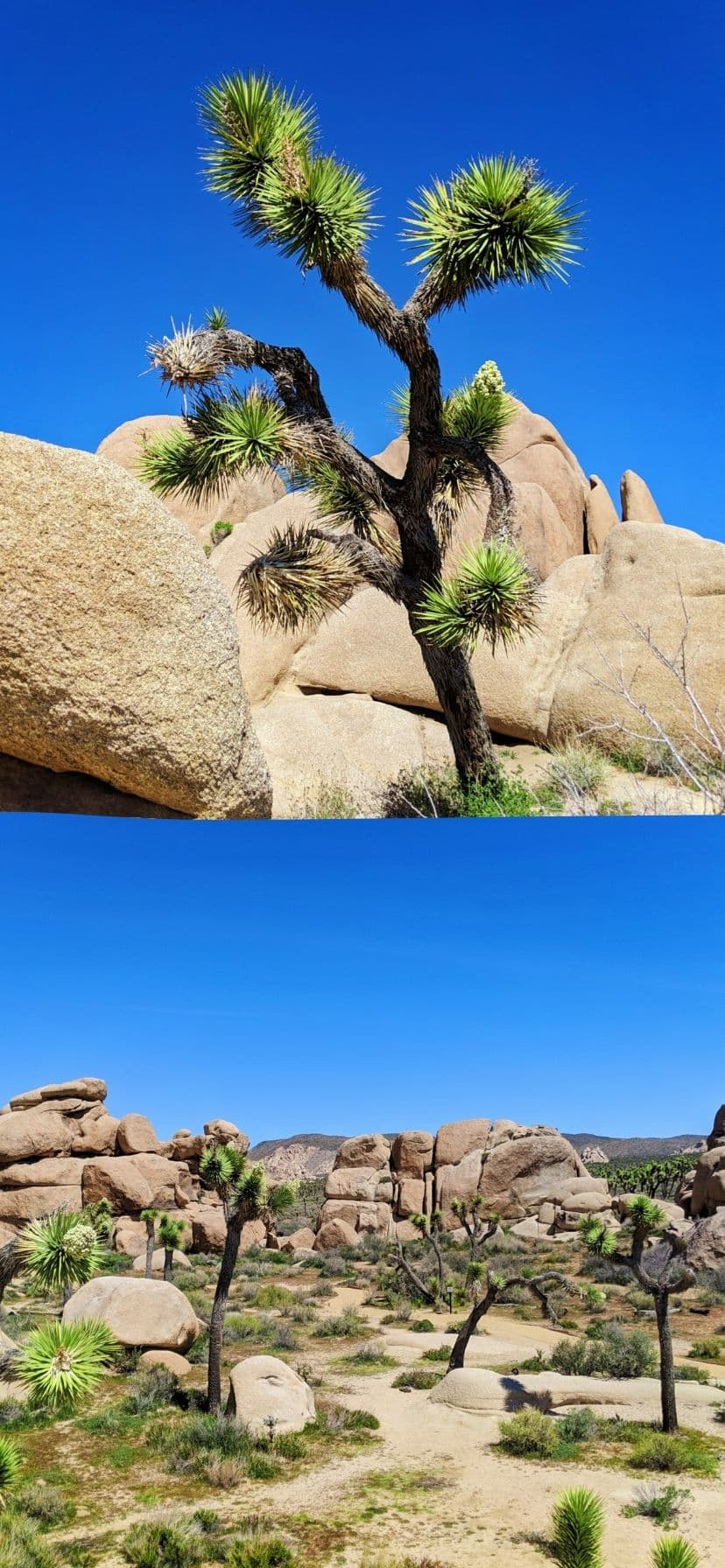 Rock Garden at Joshua Tree National Park