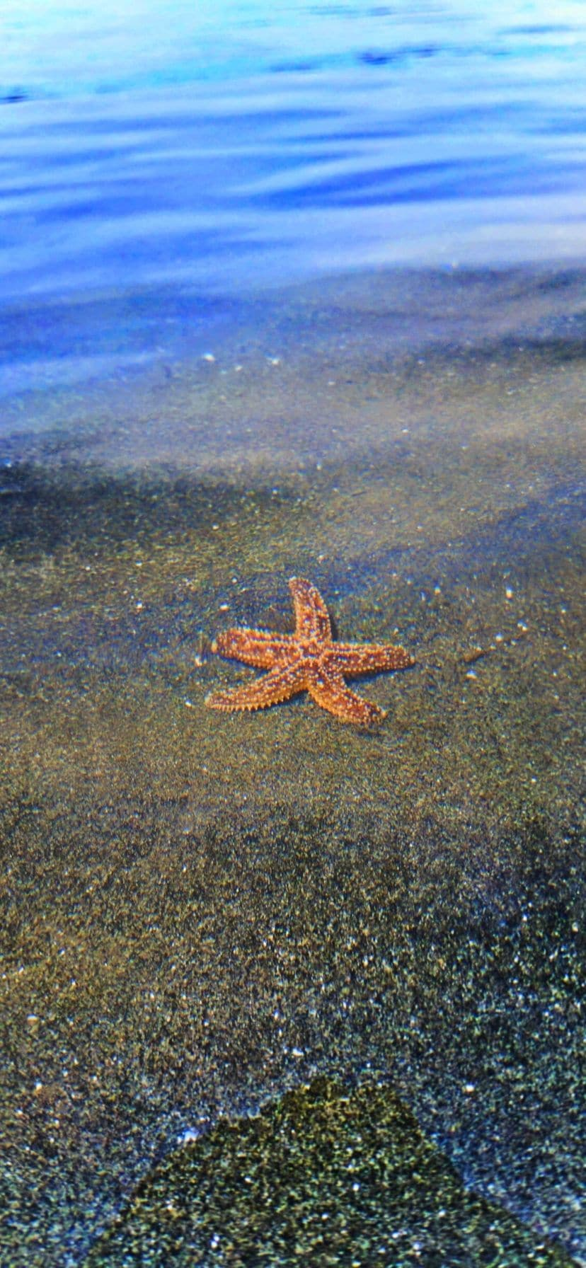 Sea Star at Ruby Beach Olympic National Park Web Story