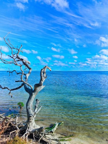 Shallow Waters at Annes Beach Islamorada Florida Keys 2020 1