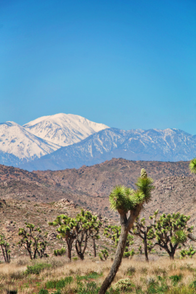 Snowy mountain seen from Joshua Tree National Park California 3