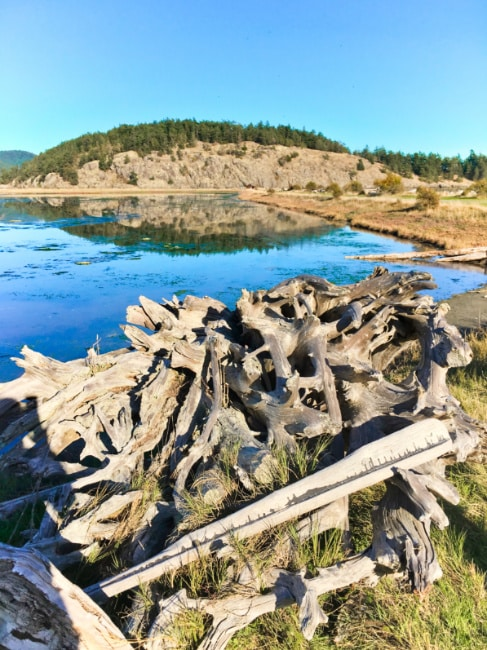 Spencer Spit State Park on Lopez Island by Barbara Marrett
