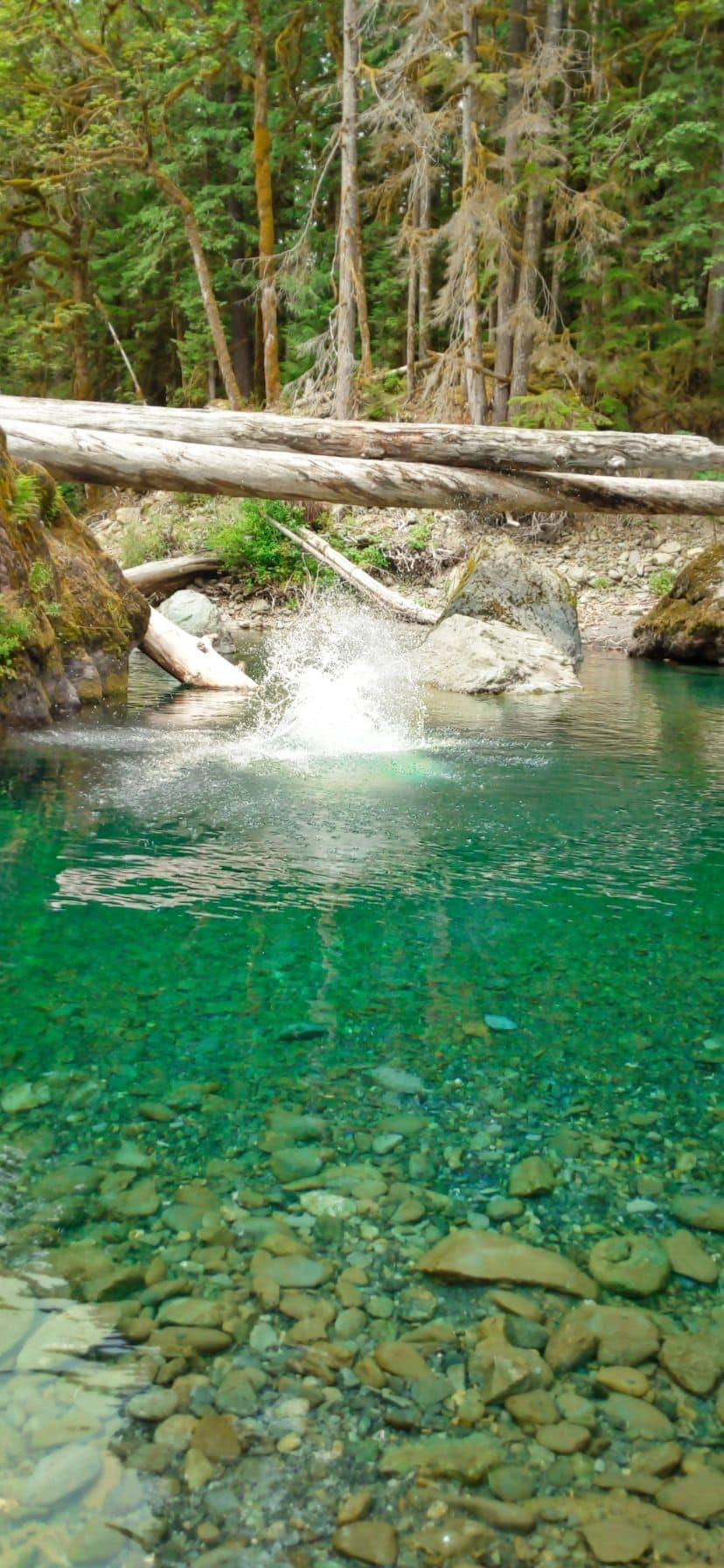 Staircase Rapids Swimming Hole on Olympic Peninsula Things to Do