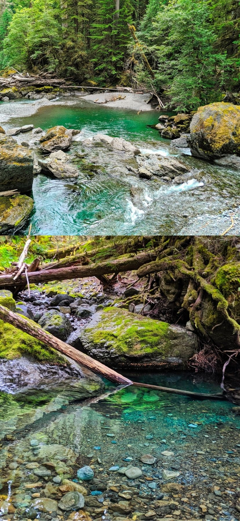 Staircase Rapids Trail on Olympic Peninsula Things to Do