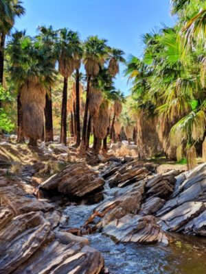 Stream in palm oasis Palm Canyon Indian Canyons Palm Springs California 2