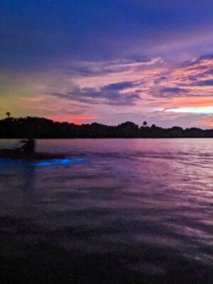 Sunset and Bioluminescence on Mosquito Lagoon Merritt Island National Wildlife Refuge Titusville Florida 2020 1