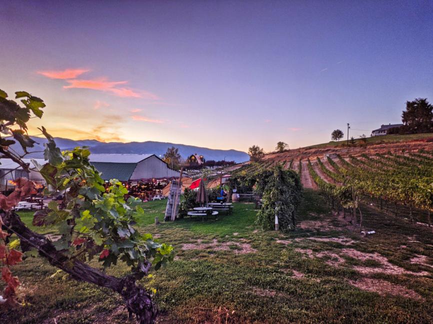 Sunset in Vineyard at Lake Chelan Winery Manson Washington 1