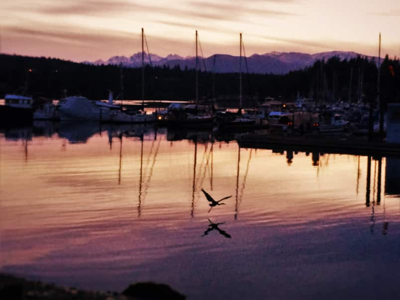 Sunset with Heron at Port Ludlow Resort