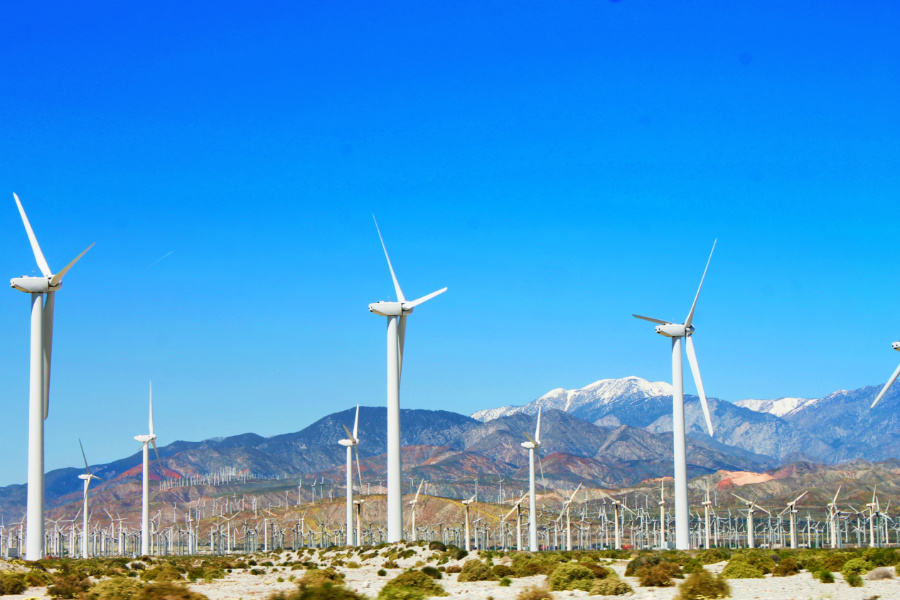 Superbloom with Wind Turbine Farm outside of Palm Springs 2