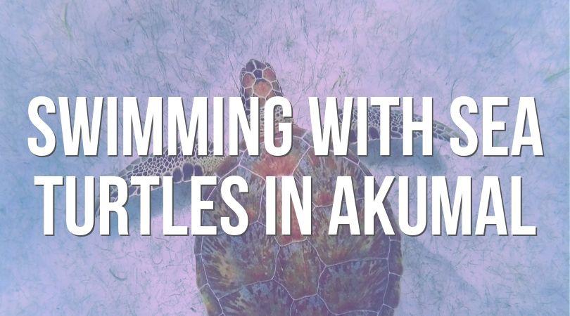 Swimming with Sea Turtles in Akumal landing