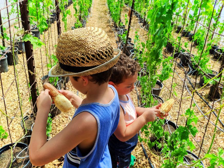 Taylor Family at Luffa Farm Nipomo Santa Maria Valley California 8