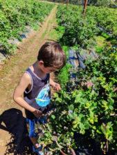Taylor Family at UPick Blueberries Santa Maria California 2